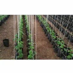 Crop Management Service