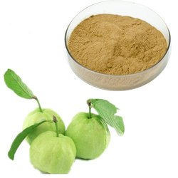 Guava Leaf Extracts Powder