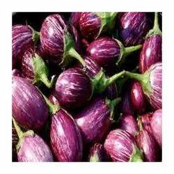 A Grade Maharashtra Fresh Organic Brinjal, Gunny Bag