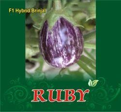 Ruby F-1 Hybrid Brinjal Seeds