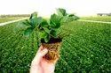 Plant Cultivation Services