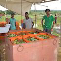 Postharvest Technology of Horticultural Crops Consultancy