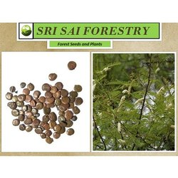 Forest Tree Seeds