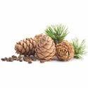 Cedar Wood Oil (Double Distilled)