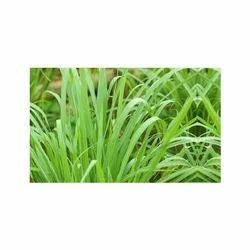 Green Lemongrass Aroma Oil