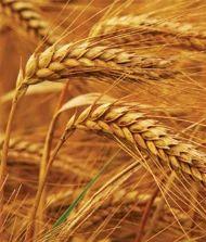 Pavizham Wheat Products
