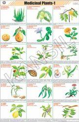Medicinal Plants - I For General Chart