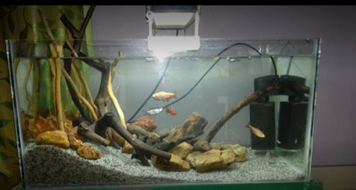 Gold Fish Pets And Candiru Fish Pet Retail Shop Hsr Pet Store
