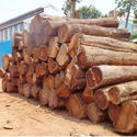 Gmelina Wood Logs