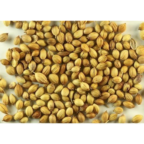 Eagle to Paroot quality Dried Coriander Seeds, For Cooking