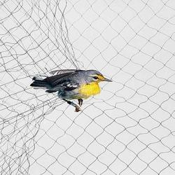 Anti Bird Netting