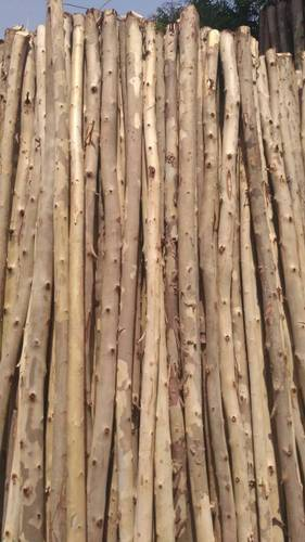 Nilgiri Poles At Rs 100 Piece Wood Poles Id 15428336412