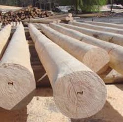 Eucalyptus Wooden Pole