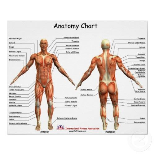 Human Anatomy Charts - View Specifications & Details of Human ...