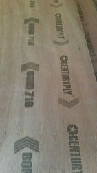 Gurjan Brown CENTURY PLY BOND 710, For Furniture