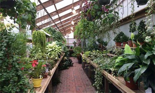 Nursery Charlotte Nc Plants Thenurseries