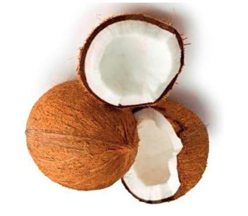 Fresh Coconuts - Fresh Organic Coconut Manufacturer from