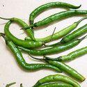 Green Chilli Oleoresin (6.6 % Capsaicin)
