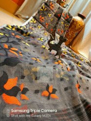 5.5 m (separate blouse piece) Festive Wear Soft Dhakai Jamdani Sarees, Without Blouse Piece