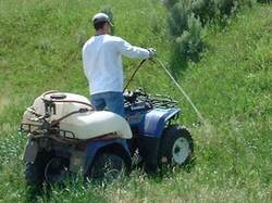 Weed Pest Control Service