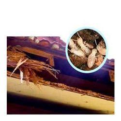 White Ants Pest Control Service