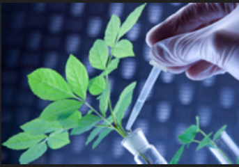 Dissertation in biotechnology in gujarat