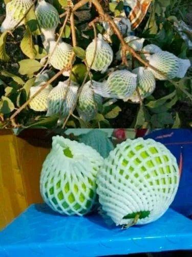 Fruit Net
