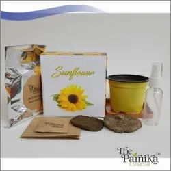 The Parnika Sunflower Plant