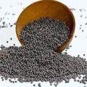 99% Mustard Seeds(raydo)