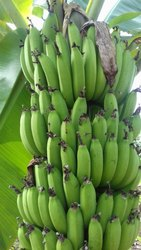 Fresh A Grade Raw Banana, Packaging Size: 20 Kg