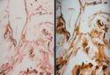 Onyx Alabaster Sheets