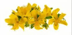 Dried St Johns Wort Hypericum Perforatum