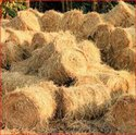 paddy straw suppliers