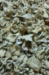 Bihar Dry Oyster Mushroom, Packaging Type: PP Bag, Packaging Size: 100