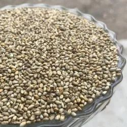 Pearl Millet - Cleaned, Organic