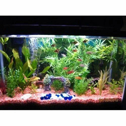 Fish Aquarium At Rs 500 Piece Fish Aquarium Id 15504624848