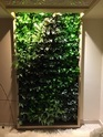 Bio Wall Artificial Vertical Garden