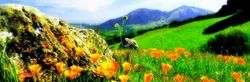 Valley Of Flowers Trek Tour Package Service