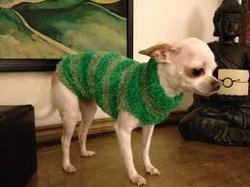 Recycled Pet Clothes