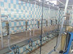 Herringbone Milking Parlor 12 Point
