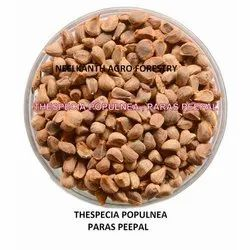 Paras Pipal Seed