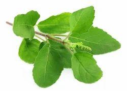Tulsi Leaves T Cut