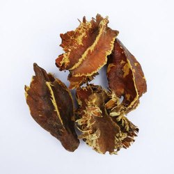 BioFuel Seed