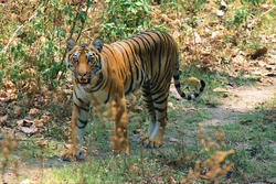Corbett Park Holiday Packages