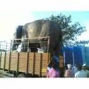 Elephant Shown Up Statue