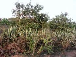 100 Acres Land for sale Rs:6,50,000/- Per Acre ICHHAPURAM (MANDAL) SRIKAKULAM (DISTRICT)