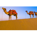Osian Desert Jaisalmer Holiday Packages