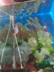 Flowerhorn Fish - Floran Fish Wholesaler & Wholesale ...