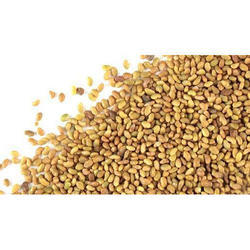 Alfa Alfa seeds Lucerene seeds