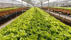 Hydroponic Commercial Vegetable Farms
